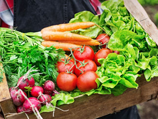 See Our Produce Offerings