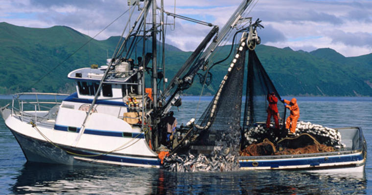 Seafood terminology for better purchasing decisions